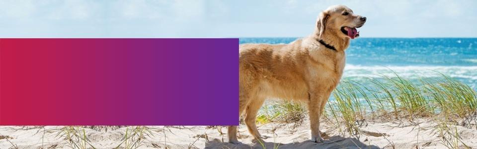 dog-leads-beach-loopyleads