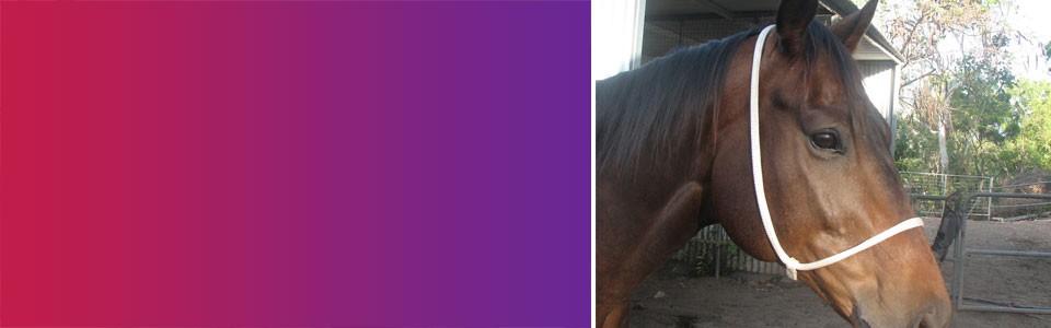 horse-accessories-banner